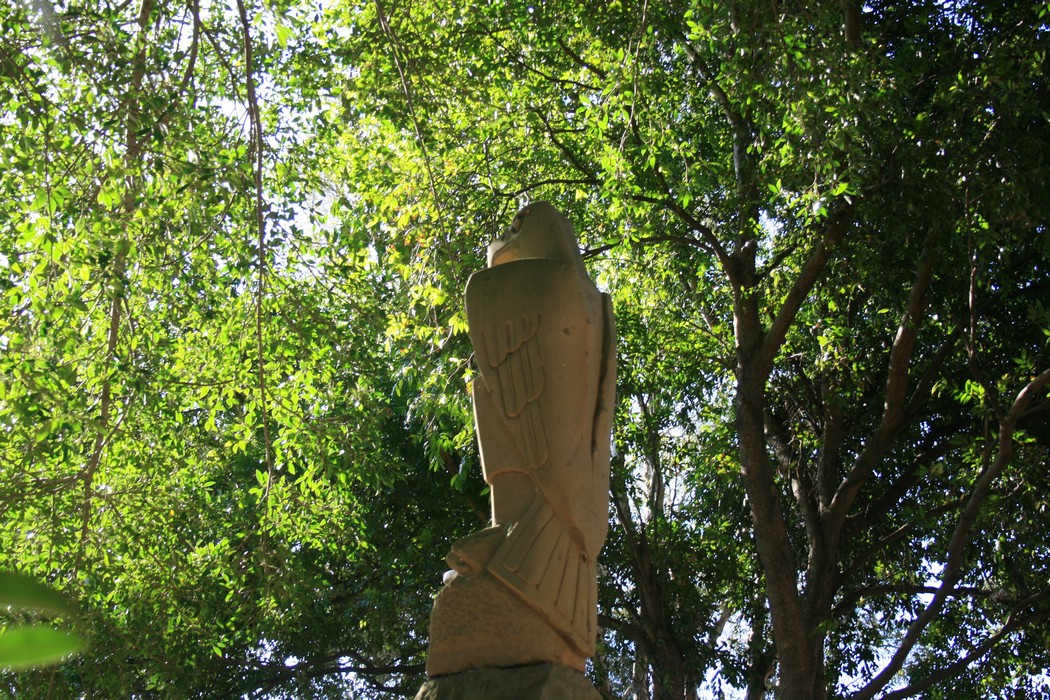 Garbage Bins Save Our Figs And Other Trees In Newcastle