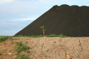 A Newcastle Coal Infrastructure group (BHP) tree trying to hide a coal pile