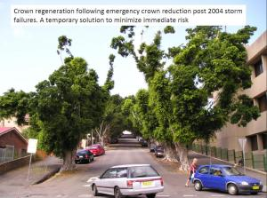 Tyrrell Street after emergency crown reduction
