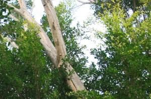 Arthur Park 14 4 2012 iv
