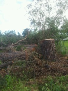 20 trees felled near a fence-line in Medowie